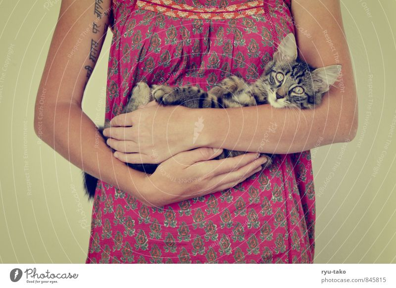 Cat Calm Animal Baby animal Feminine Together Cute Retro Protection Curiosity Dress To hold on Serene Watchfulness Pet Safety (feeling of)