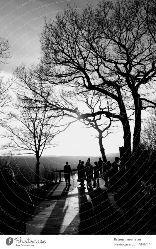 back in... Lighting Lake Hill Sun Sunbeam Physics Beautiful Gorgeous Tree Cold Treetop Back-light Black Pleasant Relaxation Nature Vantage point Footbridge Jump