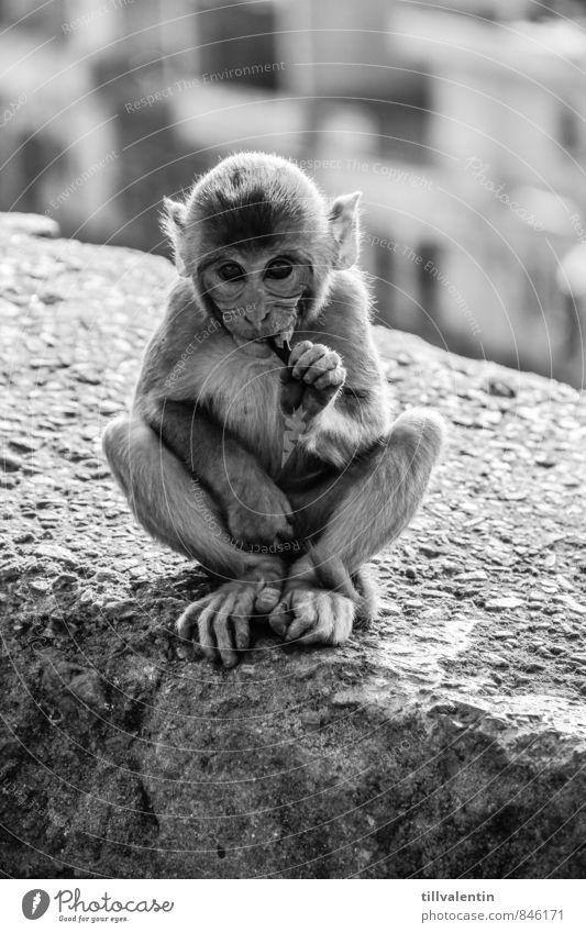 monkey eye Nutrition Eating Animal Wild animal Animal face Monkeys 1 Baby animal Feeding Sit Esthetic Simple Friendliness Beautiful Curiosity Cute Positive