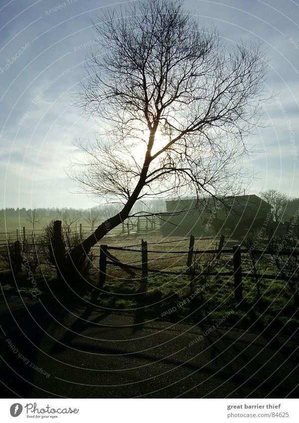 Beautiful Sky Tree Green Winter Animal Street Meadow Landscape Moody Fog Horse Asphalt Twig Vapor trail
