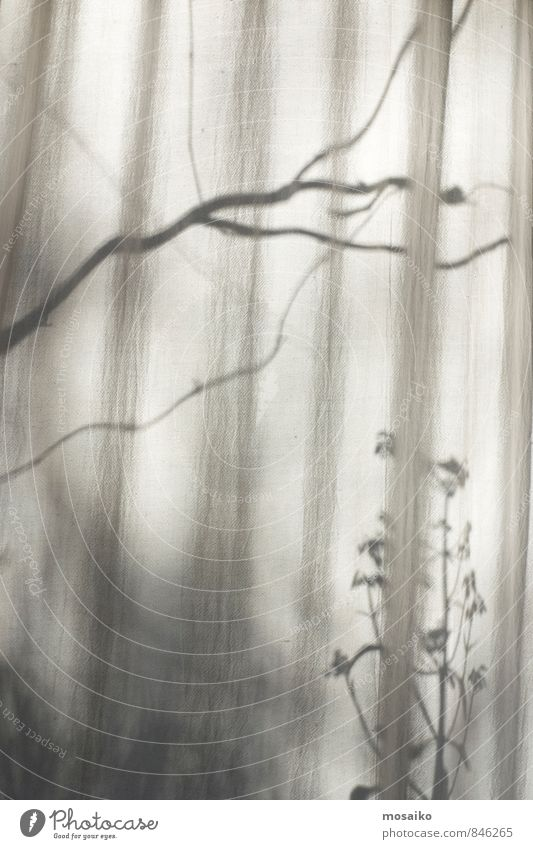 At the window Calm Nature Plant Sunlight Natural Peaceful Longing Design Contentment Nostalgia Dream Drape View from a window Shadow Autumn Branch Twig Flower