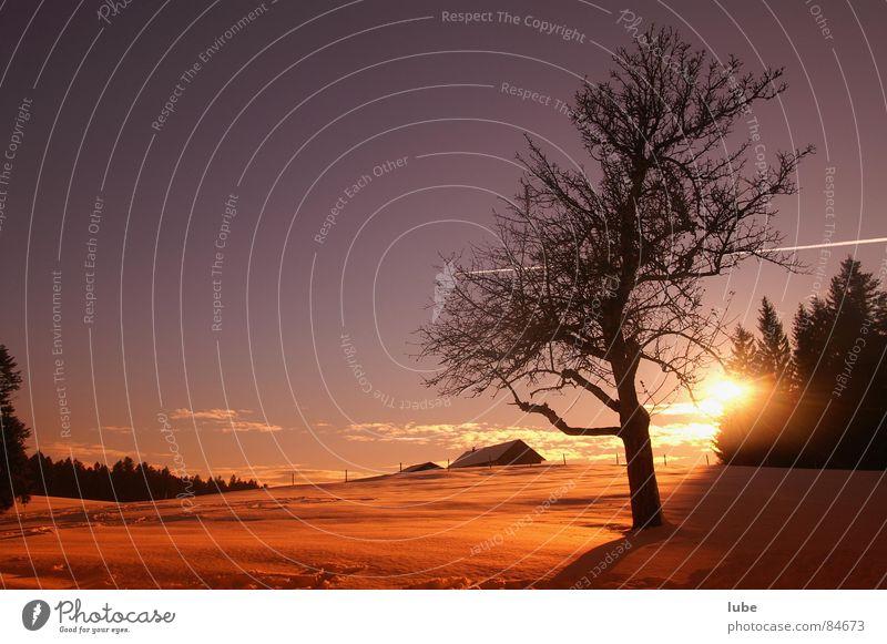 Sky Sun Winter Moody Dusk New start Sunrise Sunset Winter mood Winter sun