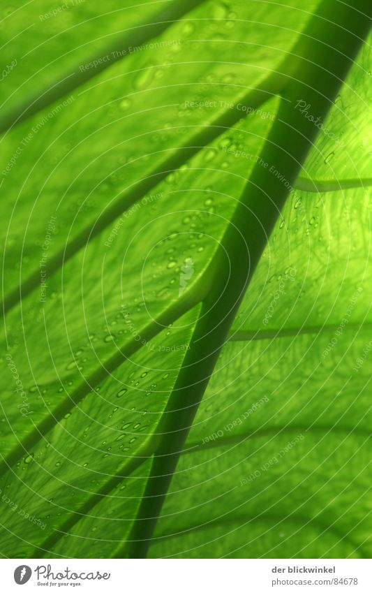 Nature Green Plant Leaf Crazy Stalk Diagonal Botany Part of the plant