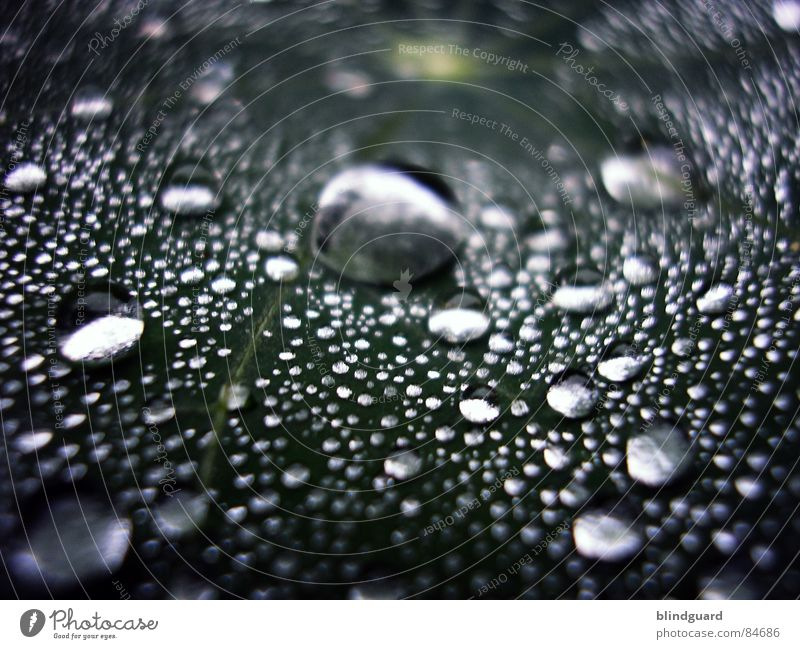 Green Water Life Small Garden Line Rain Glittering Fresh Large Wet Near Division Silver Tears Liquid