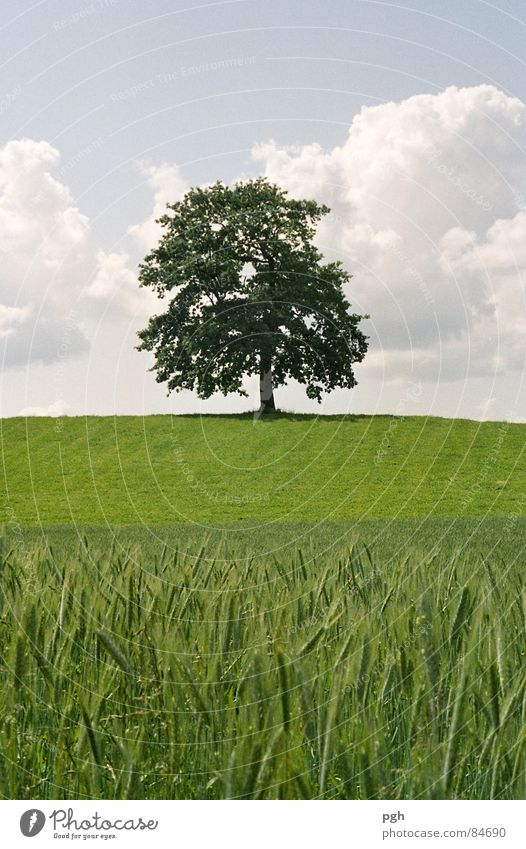 Beautiful Sky Tree Green Summer Calm Meadow Field Force Europe Esthetic Might Farm Hill Strong Agriculture