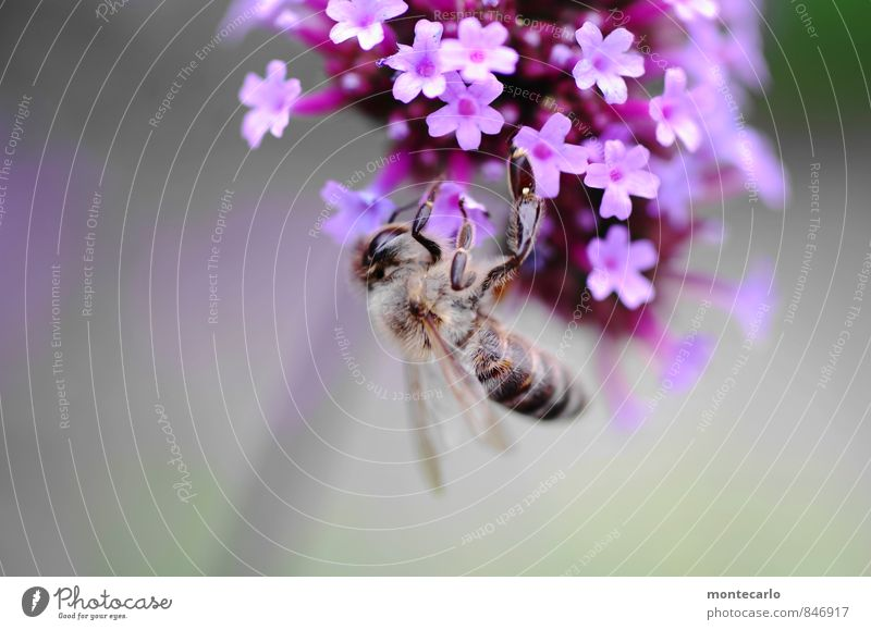 hang out Environment Nature Plant Summer Beautiful weather Flower Leaf Blossom Wild plant Bee 1 Animal Fragrance Thin Authentic Friendliness Fresh Small Near