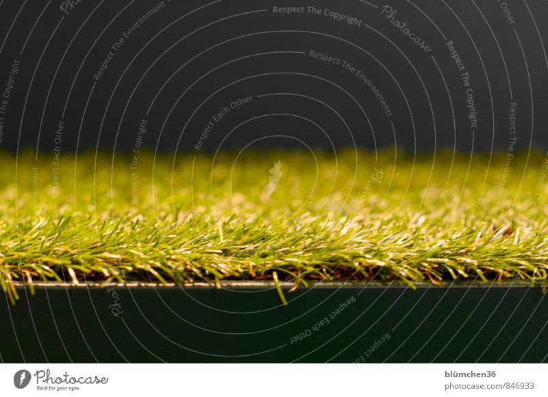 Hear the grass grow... Meadow Artificial lawn Floor covering Plastic Green Black Growth Grass Tuft of grass Blade of grass Structures and shapes Abstract Stairs