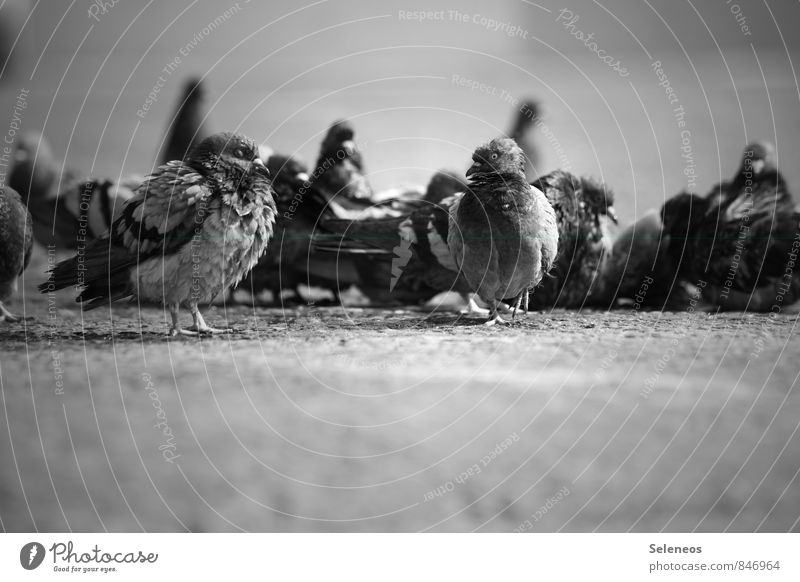 cold in the morning Animal Wild animal Bird Pigeon Animal face Wing Group of animals Flock Natural Black & white photo Exterior shot Deserted Day Light Shadow