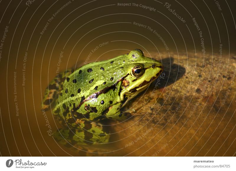Water Green Animal Yellow Cold Warmth Lake Brown Swimming & Bathing Beautiful weather Well Physics Kissing Float in the water Frog Pond