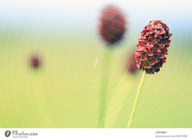 Nature Blue Plant Green Summer Red Flower Landscape Grass Blossom Bushes Wild plant Oval