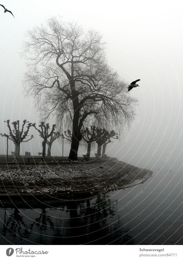 Guardian of the Fog Lake Steam Tree Bird Gray Calm Loneliness Doomed Bad weather Patient Vail Hydrophilic Damp Cool-headed Stationary Shroud of fog Dank Bare