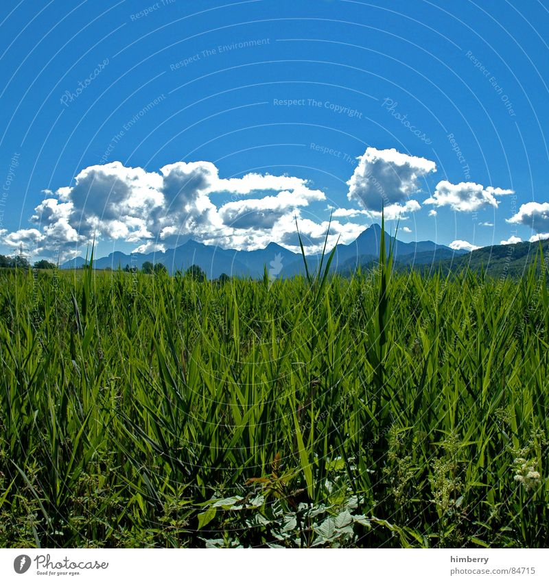 Nature Sky Green Plant Summer Clouds Meadow Grass Mountain Landscape Environment Wilderness Imprint