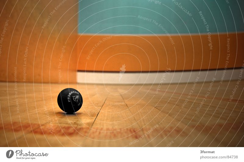 Lost Set point Squash Playing Ball sports Gymnasium Parquet floor Wood Beaten Stationary Spotted Sports Playing field Motionless Boredom Leisure and hobbies