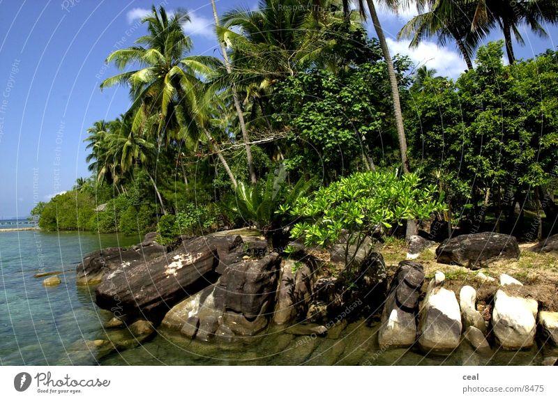 guavas Guava Beach Ocean Nature