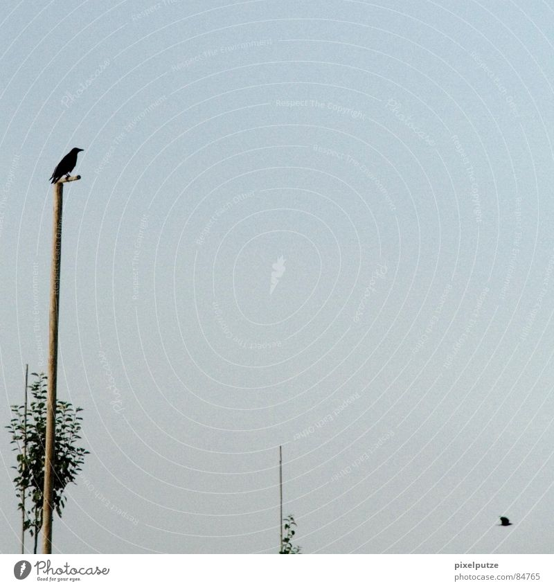 Sky Tree Green Leaf Think Air Line Room Bird Hiking Flying Sit Grief Communicate Vantage point