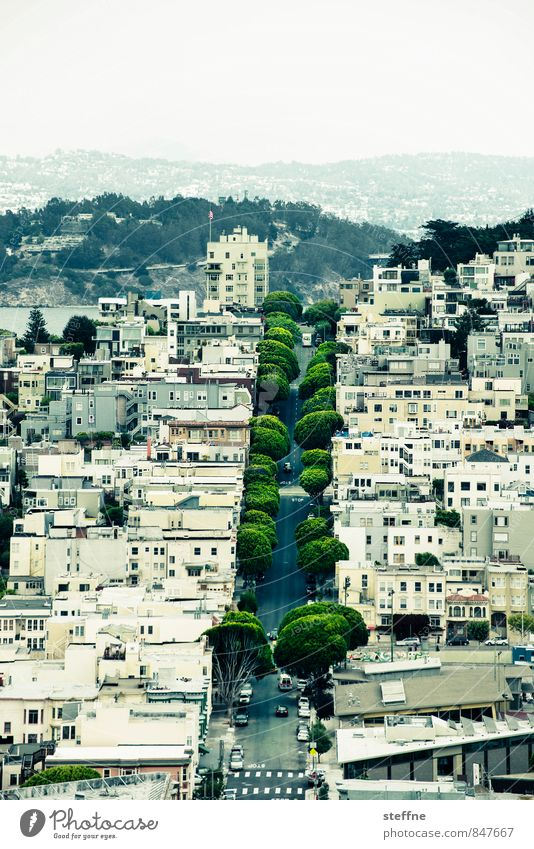Green strip Tree Hill San Francisco California USA Town House (Residential Structure) Street Beautiful Avenue Colour photo Exterior shot Bird's-eye view