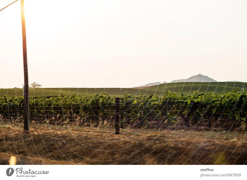 Around the World: Sonoma Valley Sunrise Sunset Sunlight To enjoy California Vineyard Wine growing Grape variety sonoma valley Colour photo Copy Space top