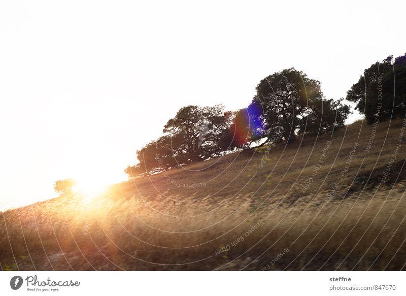Around the World: Sonoma Valley around the world Vacation & Travel Travel photography Tourism Landscape Town Skyline steffne