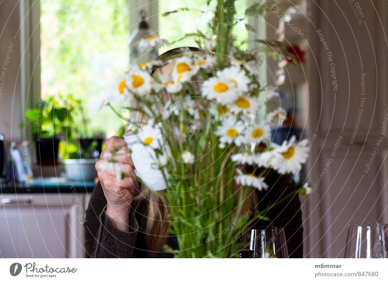 Leucanthemum vulgare Human being Woman Green Summer Relaxation Hand Flower Joy Window Adults Warmth Feminine Bright Head Blonde Sit