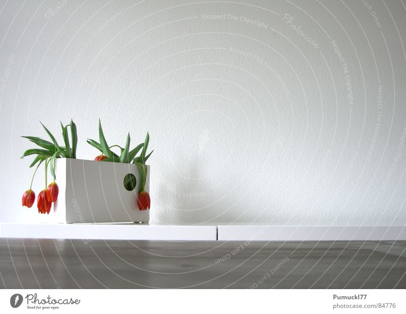 Flower Red Wall (building) Wood Sadness Brown Table Grief Decoration Dry Distress Tulip Vase Feeble Lifeless Suspended