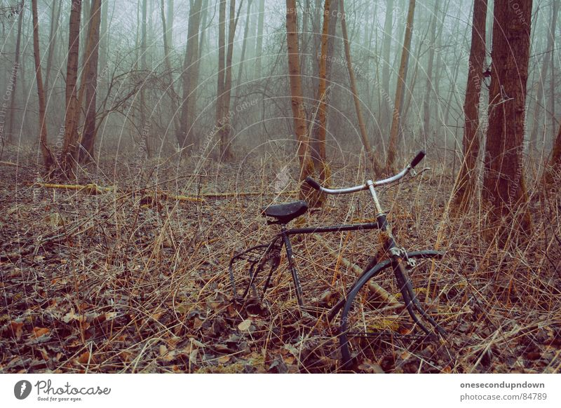 Nature Tree Winter Loneliness Dark Cold Gray Sadness Landscape Ice Bicycle Fog Empty Broken Exceptional Creepy