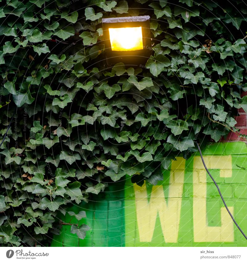 Green Yellow Sports Lamp Feasts & Celebrations Garden Going Health care Business Dirty Characters Signage Clean Construction site Hope