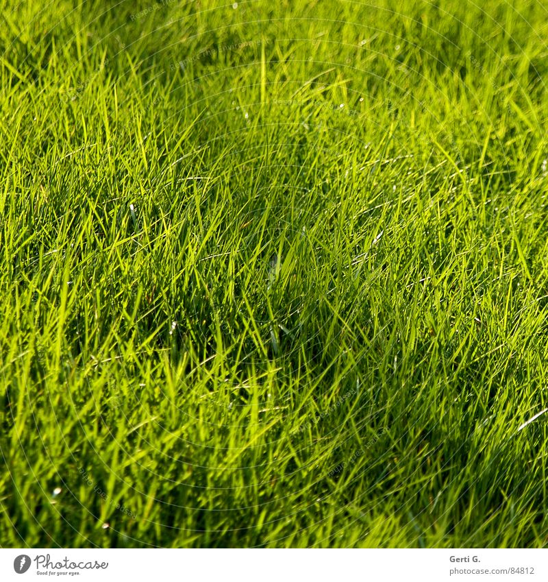 Green Summer Meadow Grass Line Field Wind Fresh Lawn Square Agriculture Harvest Pasture Blade of grass Juicy Hiding place