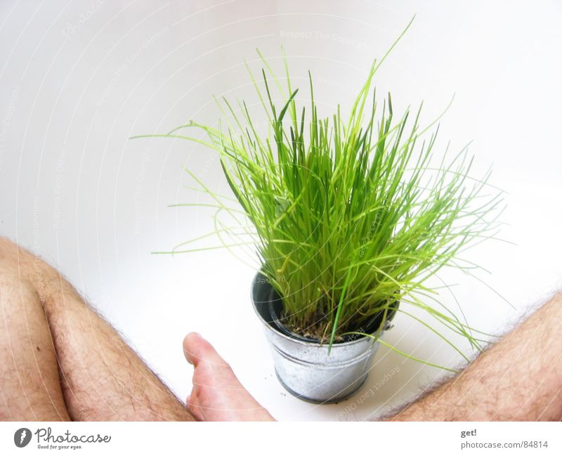 It's summer! Green Bathtub Chives Planning Vegetable water white