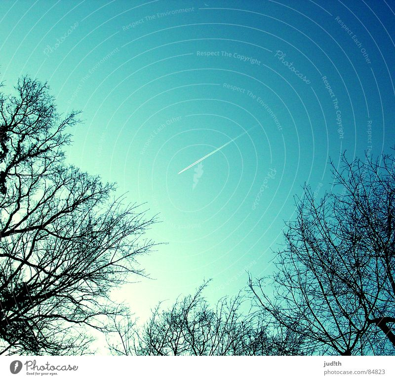 Sky White Tree Sun Blue Vacation & Travel Black Line Airplane Aviation Branch Stripe Longing Vapor trail