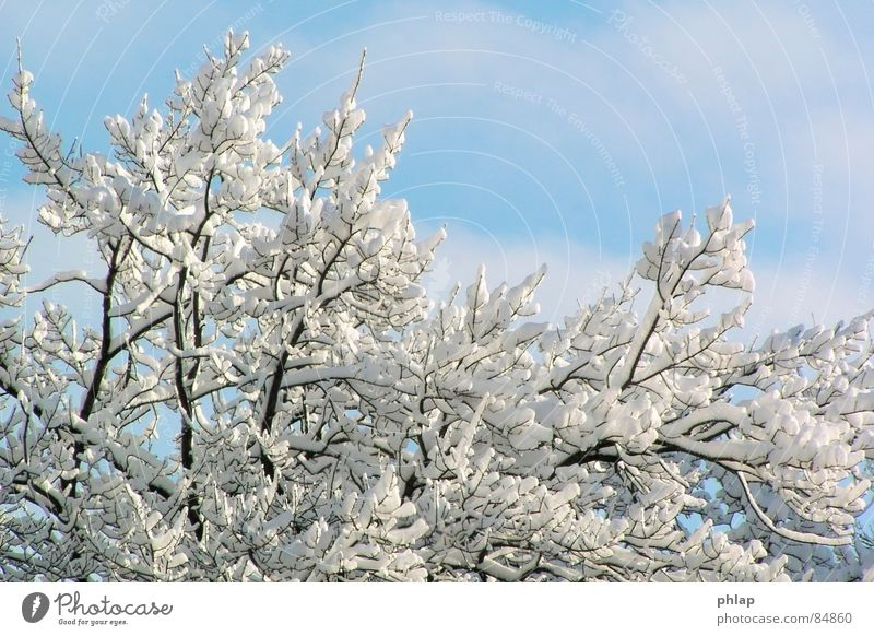 A fairy tale from ancient times Really January Cold Ice Environment Fresh Authentic Illuminating Winter Beautiful Climate Snow Nature Sky Weather Natural