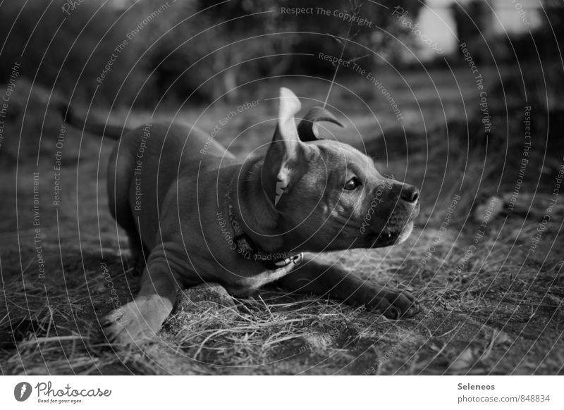 toss sticks Trip Adventure Meadow Animal Pet Dog Animal face 1 Baby animal Playing Love of animals Black & white photo Day Animal portrait