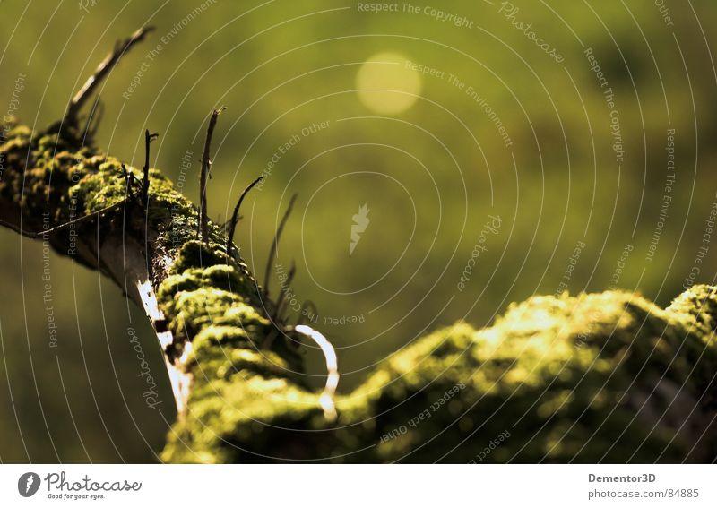 [bridge] Blur Green Tree Autumn dof Root Focal point dark green shadflower wood pewee focusing greyish-green peewee center on grayish-green silver-green elkwood