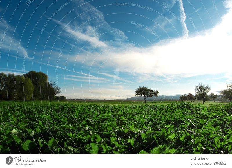 morning dew Field Agriculture Fog Calm Comfortable Tree trunk Sky Tree structure Nutrition green Rope Canopy (sky)