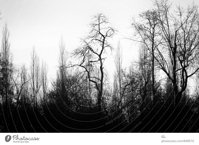 gloomy world Environment Nature Landscape Elements Sky Autumn Winter Climate Bad weather Tree Forest Dark Creepy Sadness Loneliness Fear Black & white photo