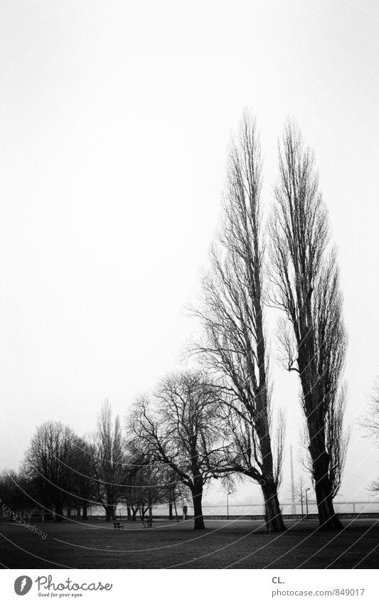 before the storm Environment Nature Landscape Sky Autumn Winter Climate Tree Park Meadow Gloomy Wanderlust Rhein meadows Duesseldorf Black & white photo