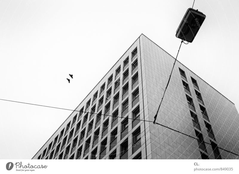Sky City House (Residential Structure) Animal Window Wall (building) Architecture Wall (barrier) Building Gray Freedom Flying Bird Together Facade Gloomy