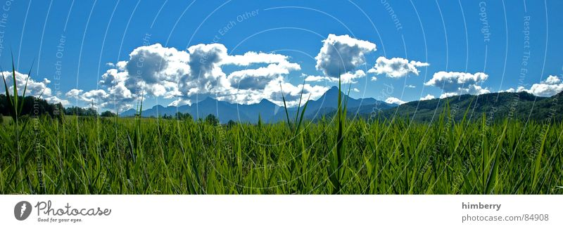 Nature Sky Green Plant Summer Clouds Meadow Grass Mountain Landscape Environment Wilderness Green space Firmament Law of nature