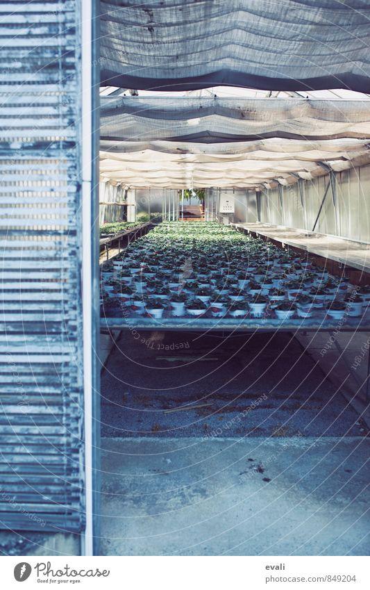 Plant Gray Growth Pot plant Greenhouse