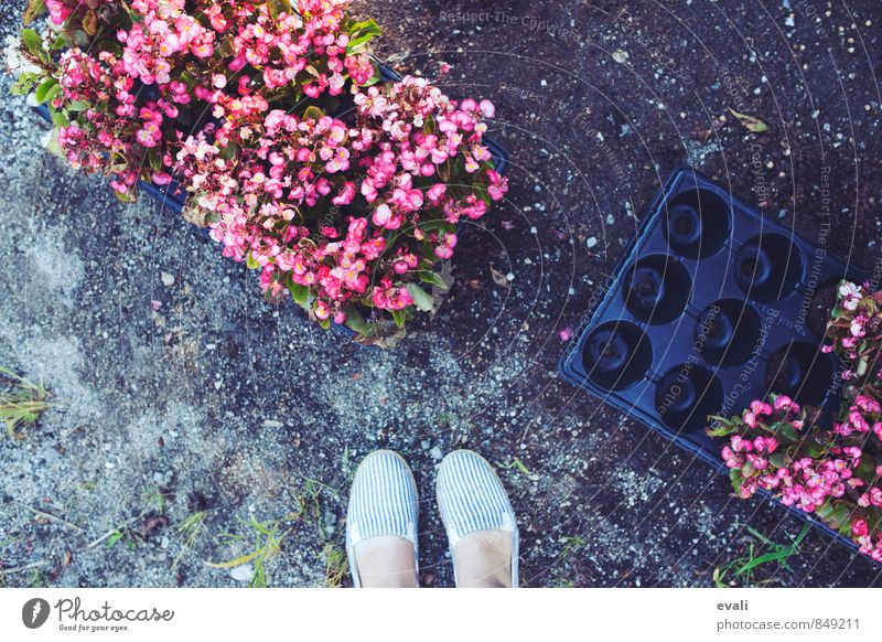 floral greetings Feet 1 Human being Plant Flower Garden Park Fresh Pink Footwear plant flowers Insert flowers Gardening Colour photo Exterior shot Day