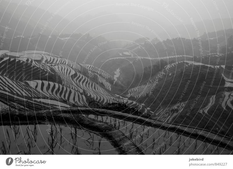 rice terraces Rice Hill Growth Terraced fields China Paddy field Agricultural product Mountain Black & white photo Exterior shot Deserted Copy Space top Day
