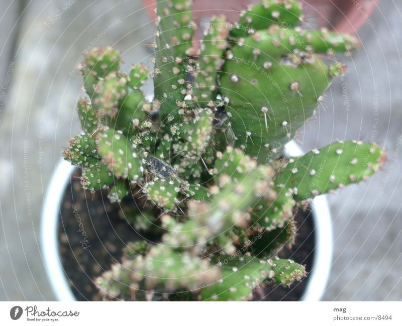 cactus Cactus Plant downward Nature