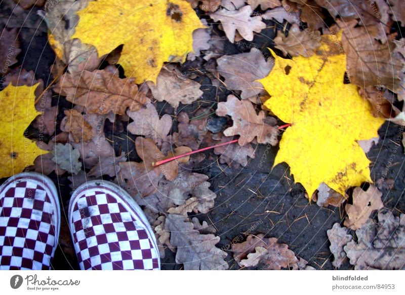 Leaf Loneliness Yellow Forest Cold Autumn Sadness Earth Ice Dirty Empty Floor covering Grief Distress Subsoil Banal