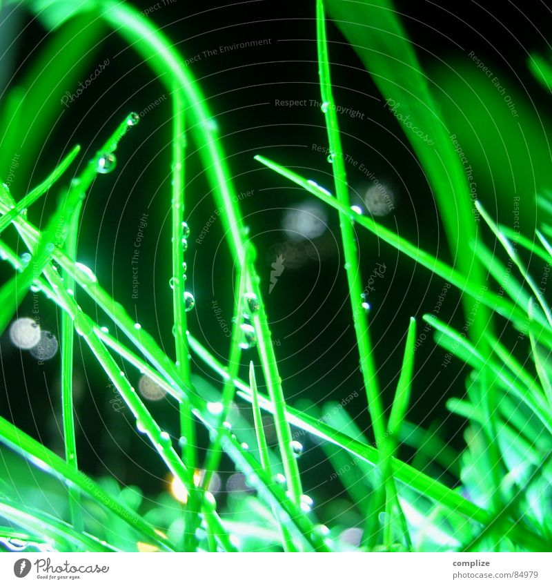 Nature Green Meadow Grass Drops of water Wet Lawn Drop Damp Pasture Blade of grass Neon light Floodlight Floodlight Flare Beam of light