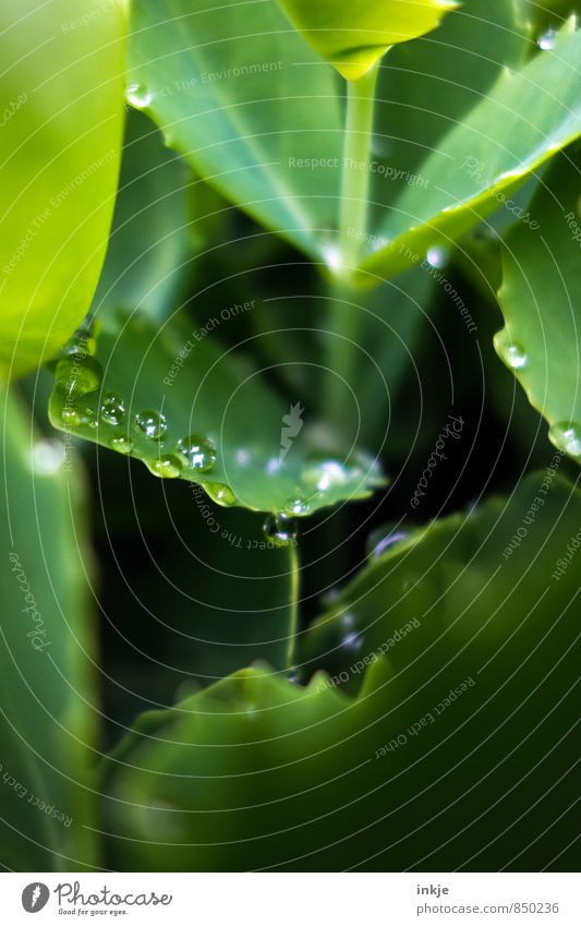 droplet Nature Drops of water Spring Summer Beautiful weather Rain Plant Leaf Foliage plant Garden Park Lie Fresh Wet Natural Round Juicy Green Deep green
