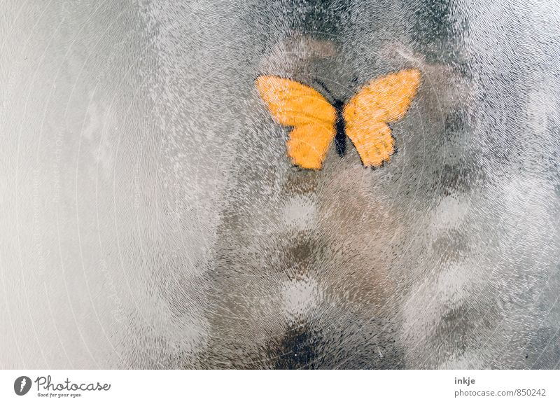 a butterfly doesn't make a summer yet Lifestyle Deserted Butterfly 1 Animal Window pane Pane Frosted glass Label Glass Hang Yellow Decoration Stuck on