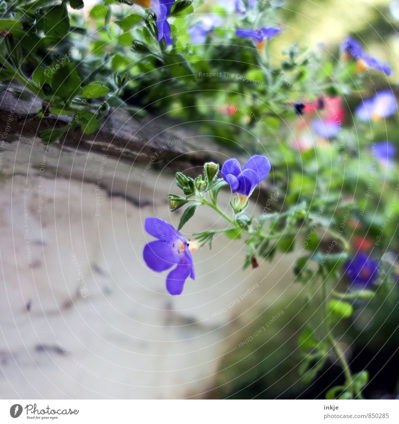 Nature Blue Plant Beautiful Green Summer Flower Environment Blossom Spring Natural Small Garden Park Blossoming Near