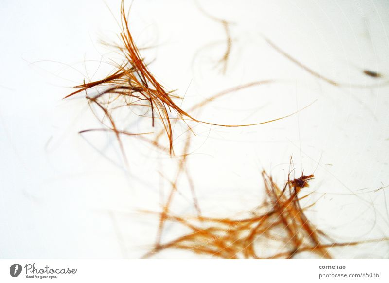 Hair and hairstyles Line Orange Bushes Chaos Muddled Graphic Cut Untidy Reduce Gooseflesh