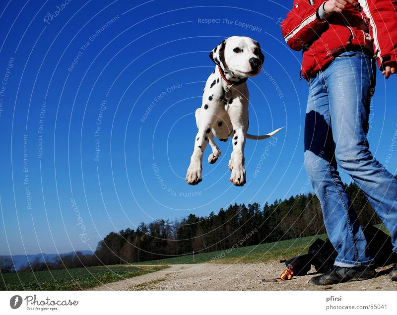 Sky Dog Joy Forest Spring Jump To go for a walk Point To enjoy Joie de vivre (Vitality) Lust Pet Mammal Paw Animal Enthusiasm