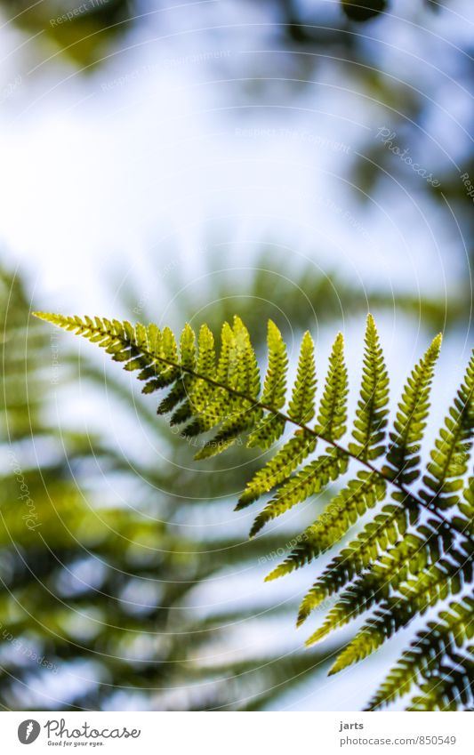 fern Plant Sky Summer Beautiful weather Grass Bushes Leaf Foliage plant Wild plant Forest Fresh Natural Green Nature Fern Colour photo Exterior shot Close-up