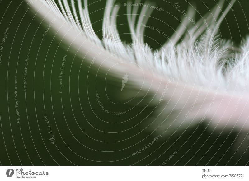 Nature Beautiful Green White Natural Flying Bird Elegant Authentic Esthetic Feather Wing Simple Romance Kitsch Harmonious